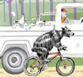 Bear on a mountain bike being passed by a hunter in a truck