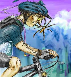 Golden orb weaver and face of mountain biker
